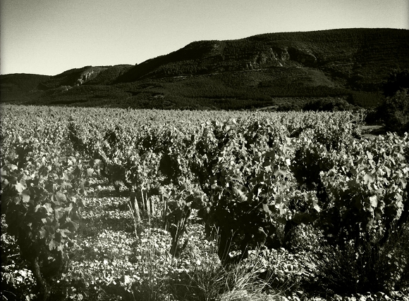 Blog Vin - Clos Maia - Vignes 1