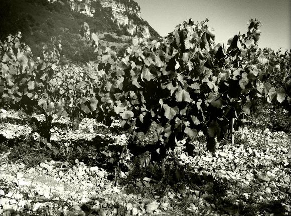 Blog Vin - Clos Maia - Vignes 2