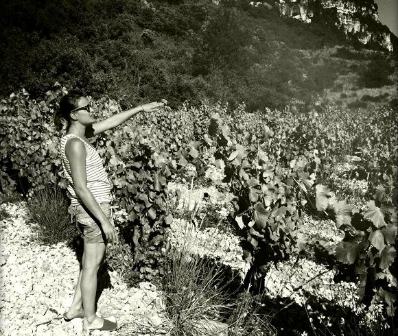 Blog Vin - Clos Maia - Vignes 4