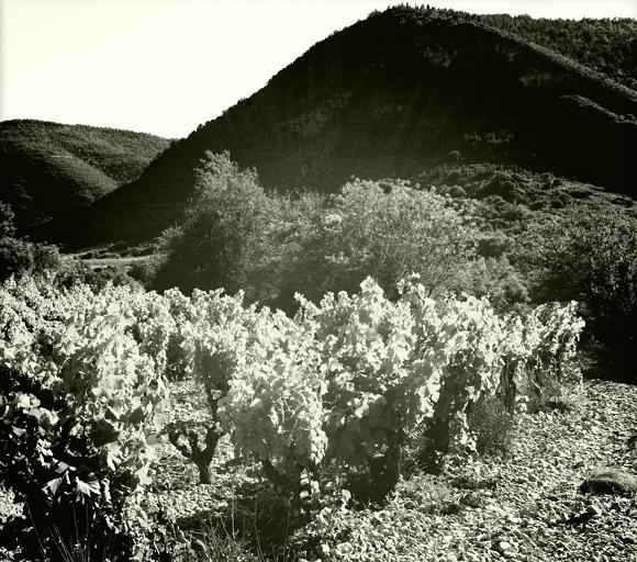 Blog Vin - Clos Maia - vignes 3