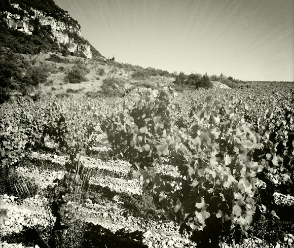Blog Vin - Clos Maia - vignes 5