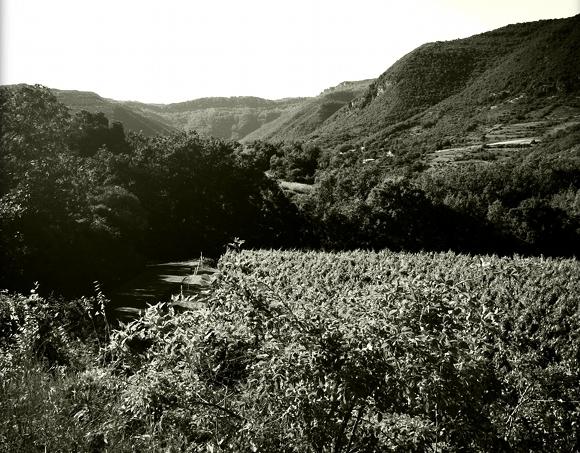 Blog Vin - Mas Haut Buis - Vignes