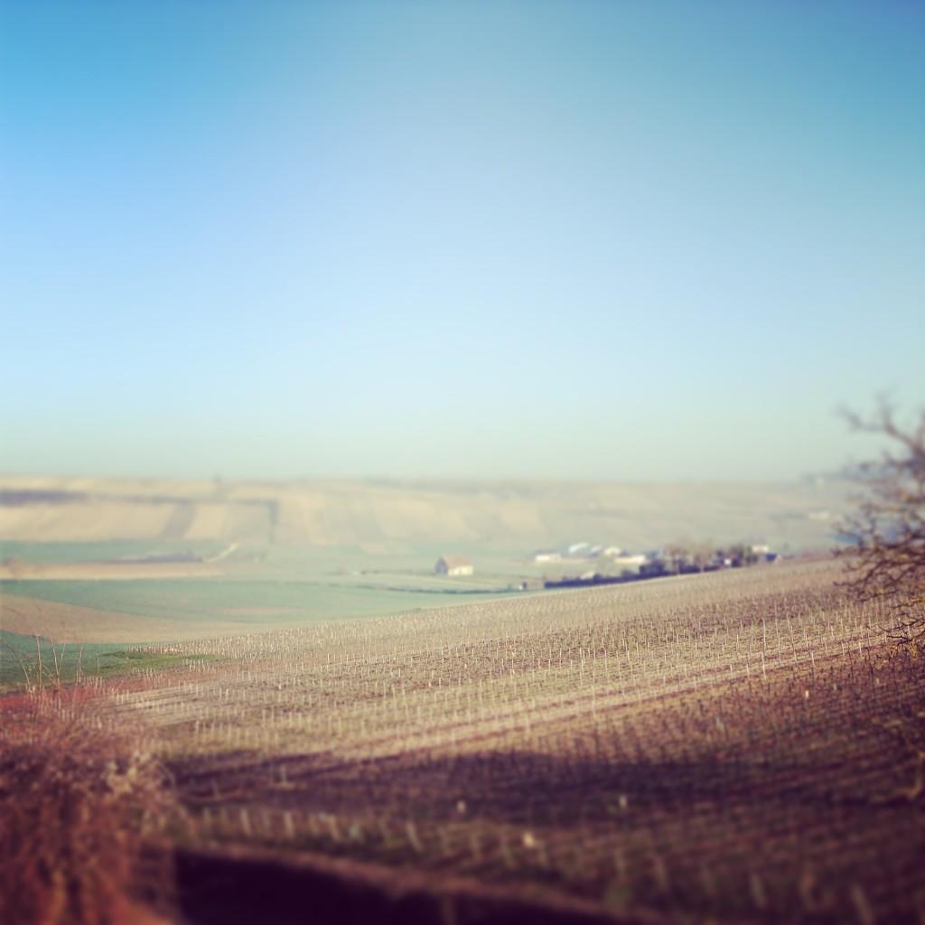 Blog vin - Concours de degustation - RVF - 2014 - Sancerre