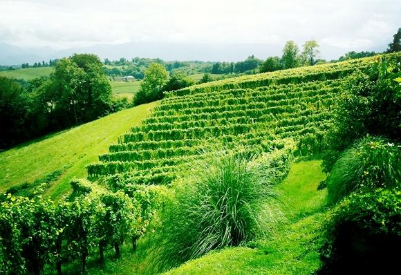 Blog vin - Domaine Camin Larredya - Jurançon - vignes 1