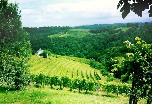 Blog vin - Domaine Camin Larredya - Jurançon - vignes 2