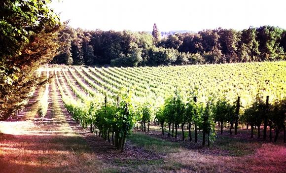 Montravel - Concours de degustation - mai 2011 - Chateau Le Raz - Vignes